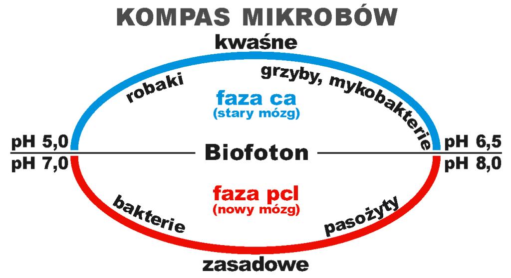Kompas mikrobów_1
