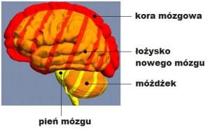 Mózg_wszystko